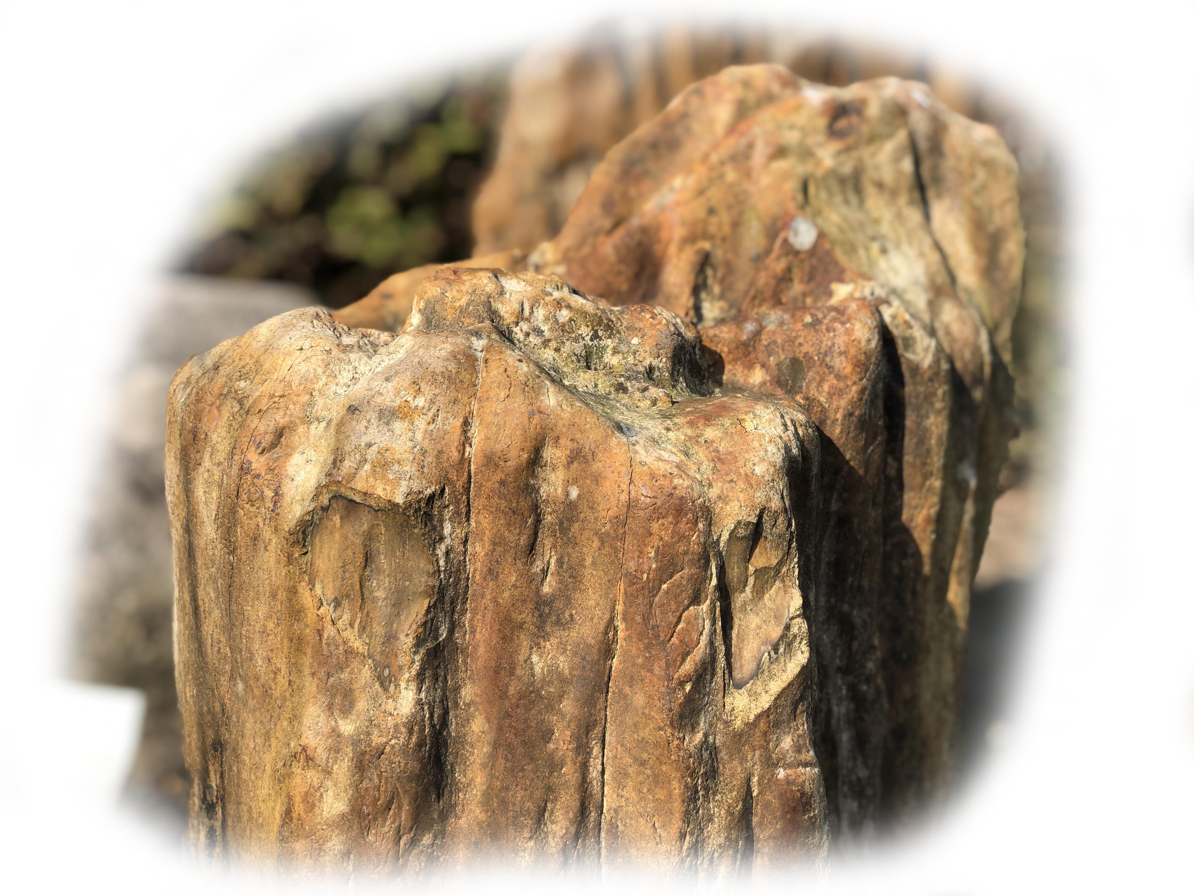 Versteend hout K-132