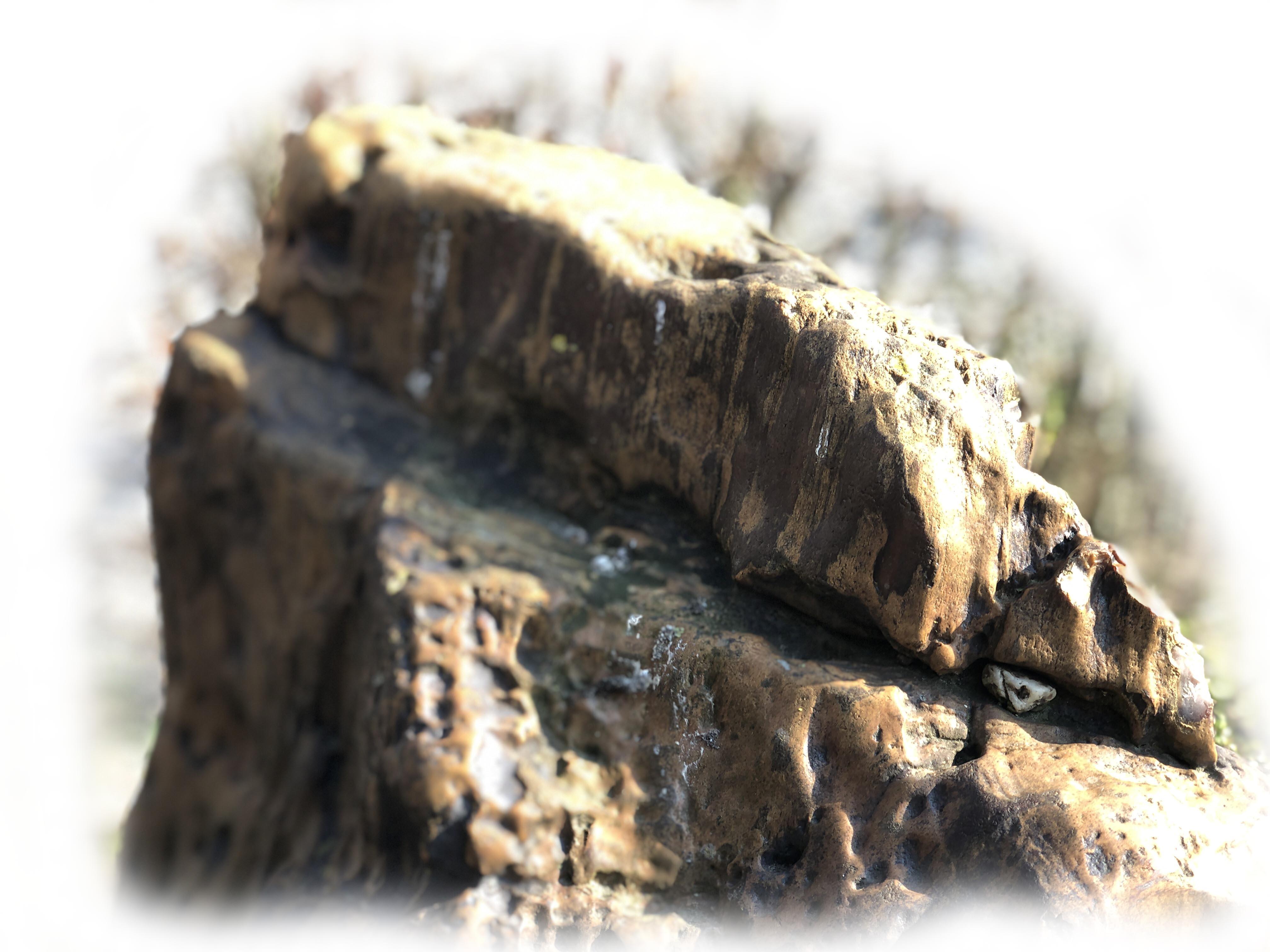 Versteend hout K-133