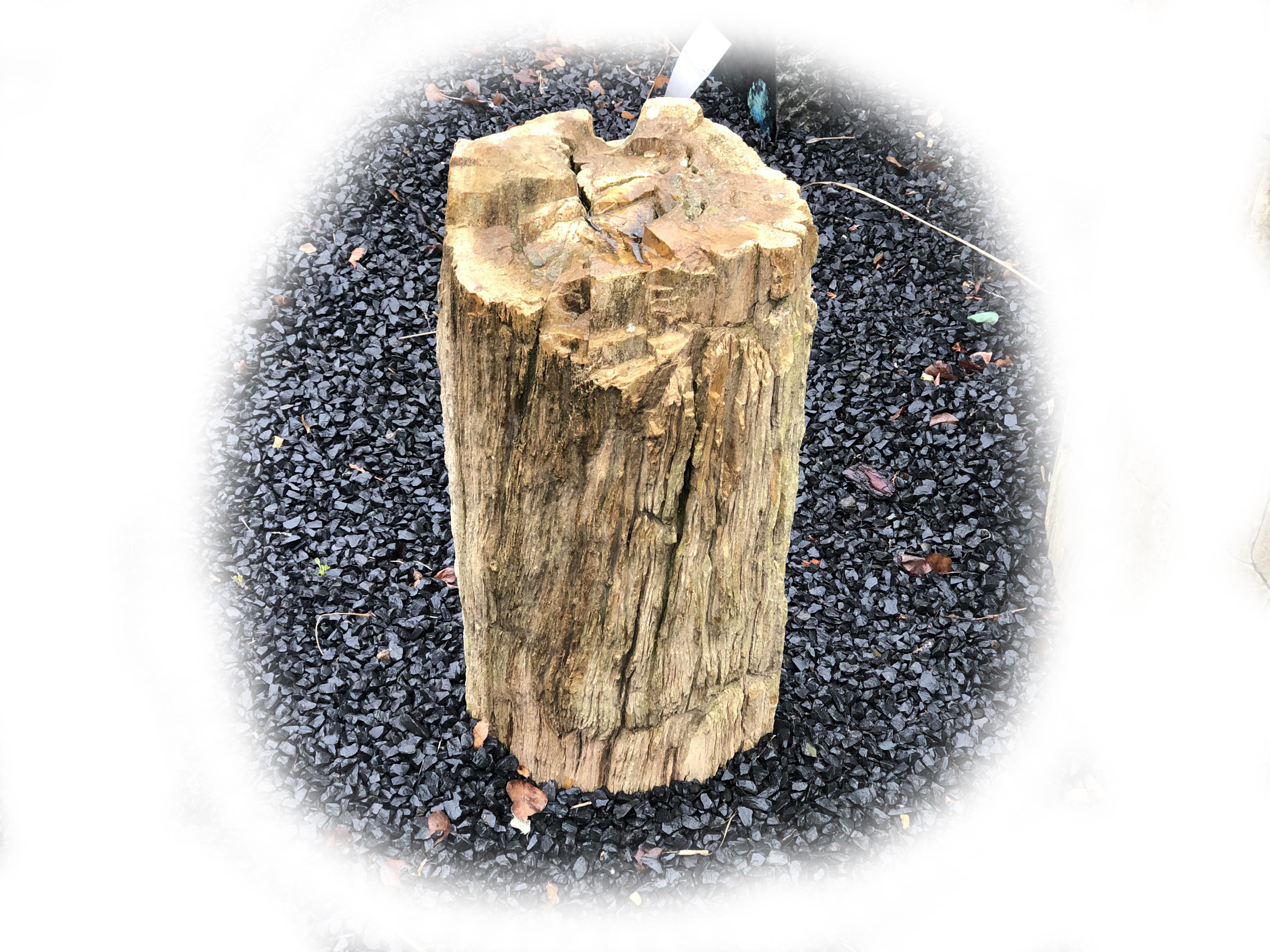 Versteend hout K-144
