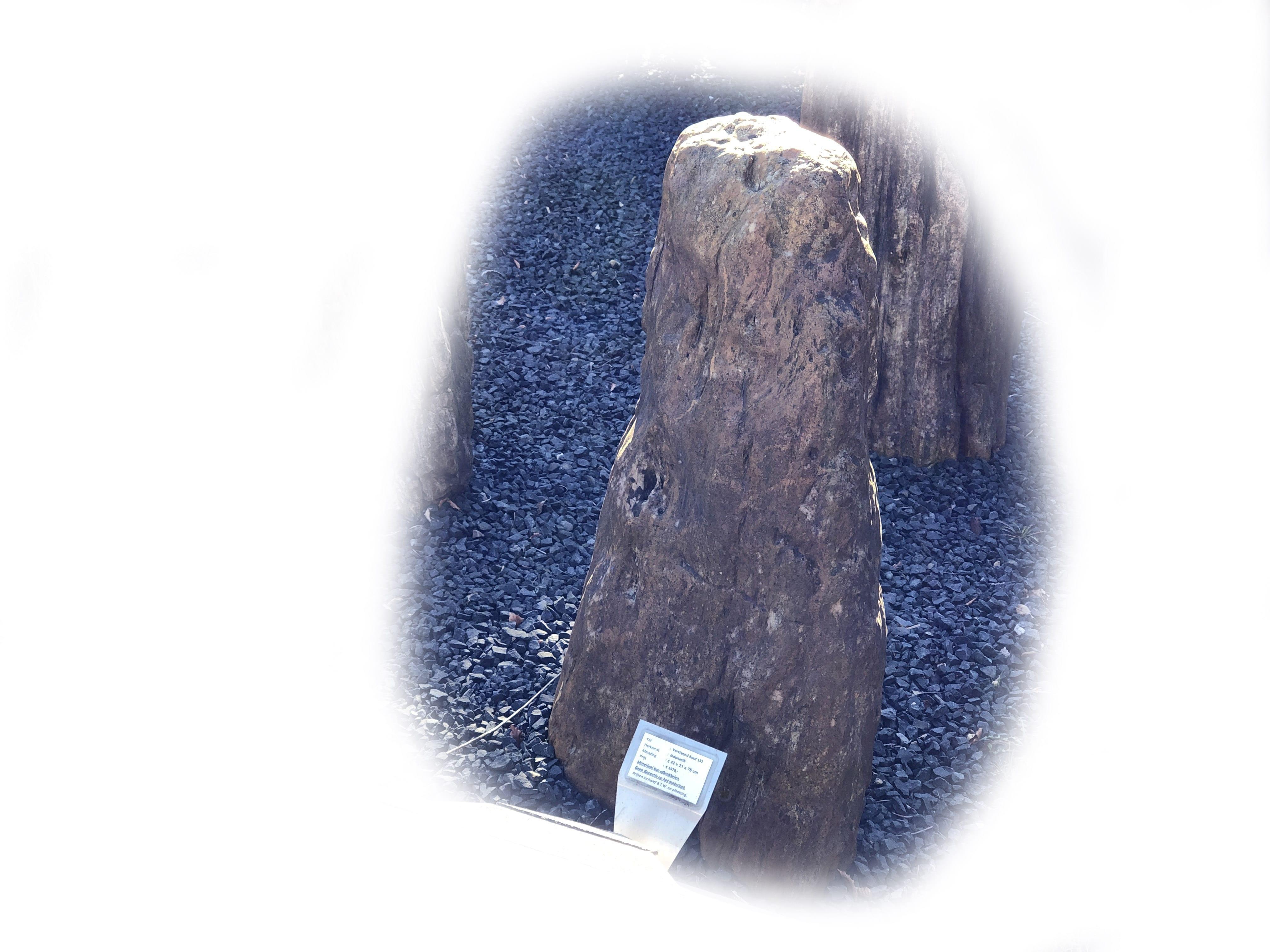 Versteend hout K-131