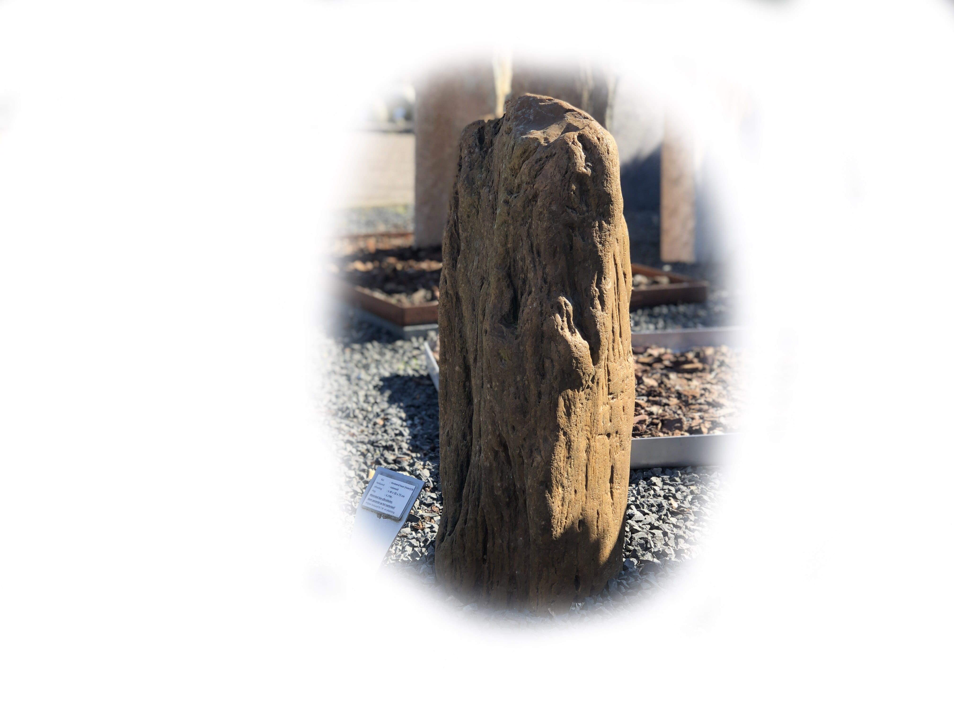 Versteend hout K-138