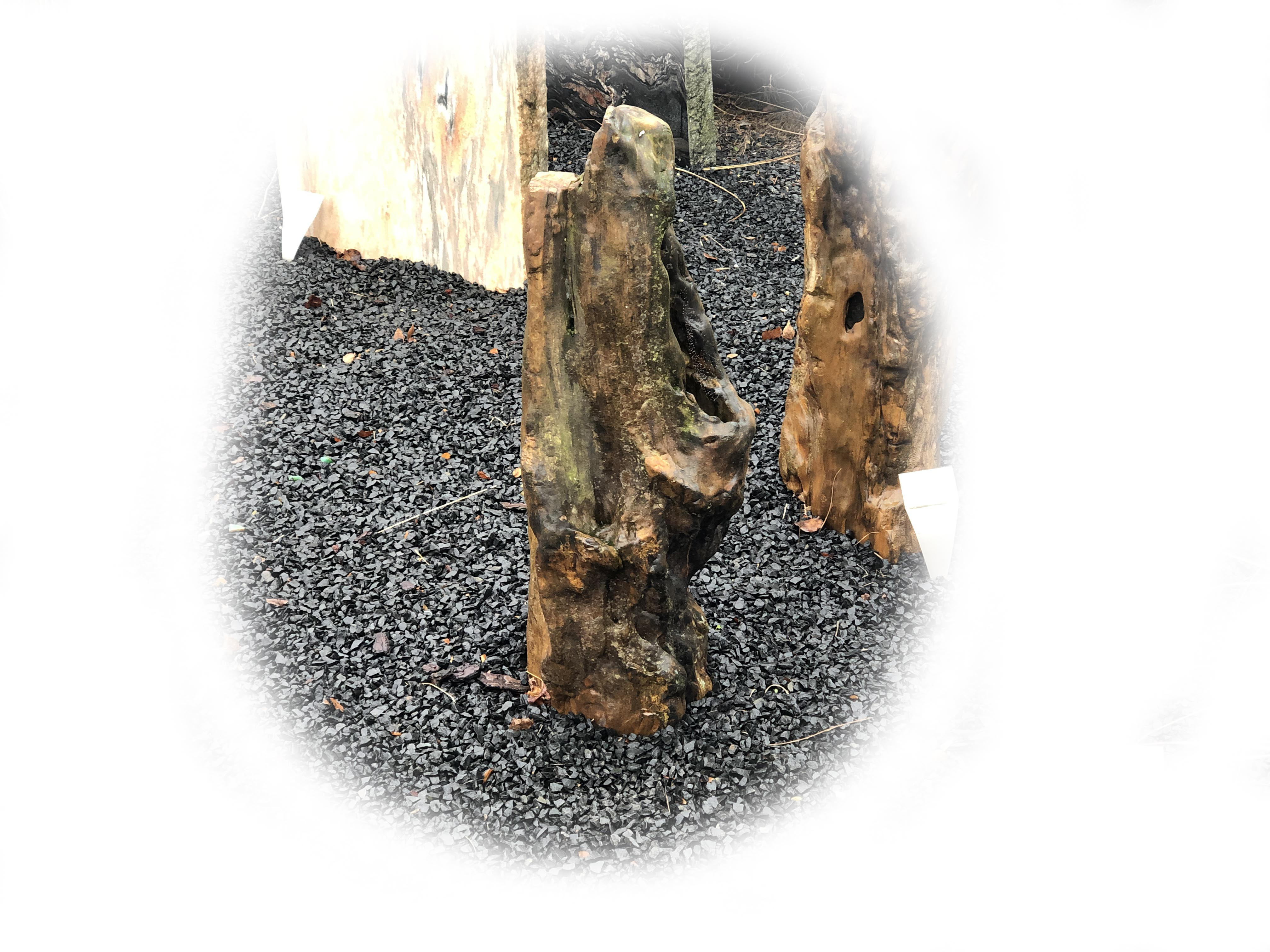 Versteend hout K-141