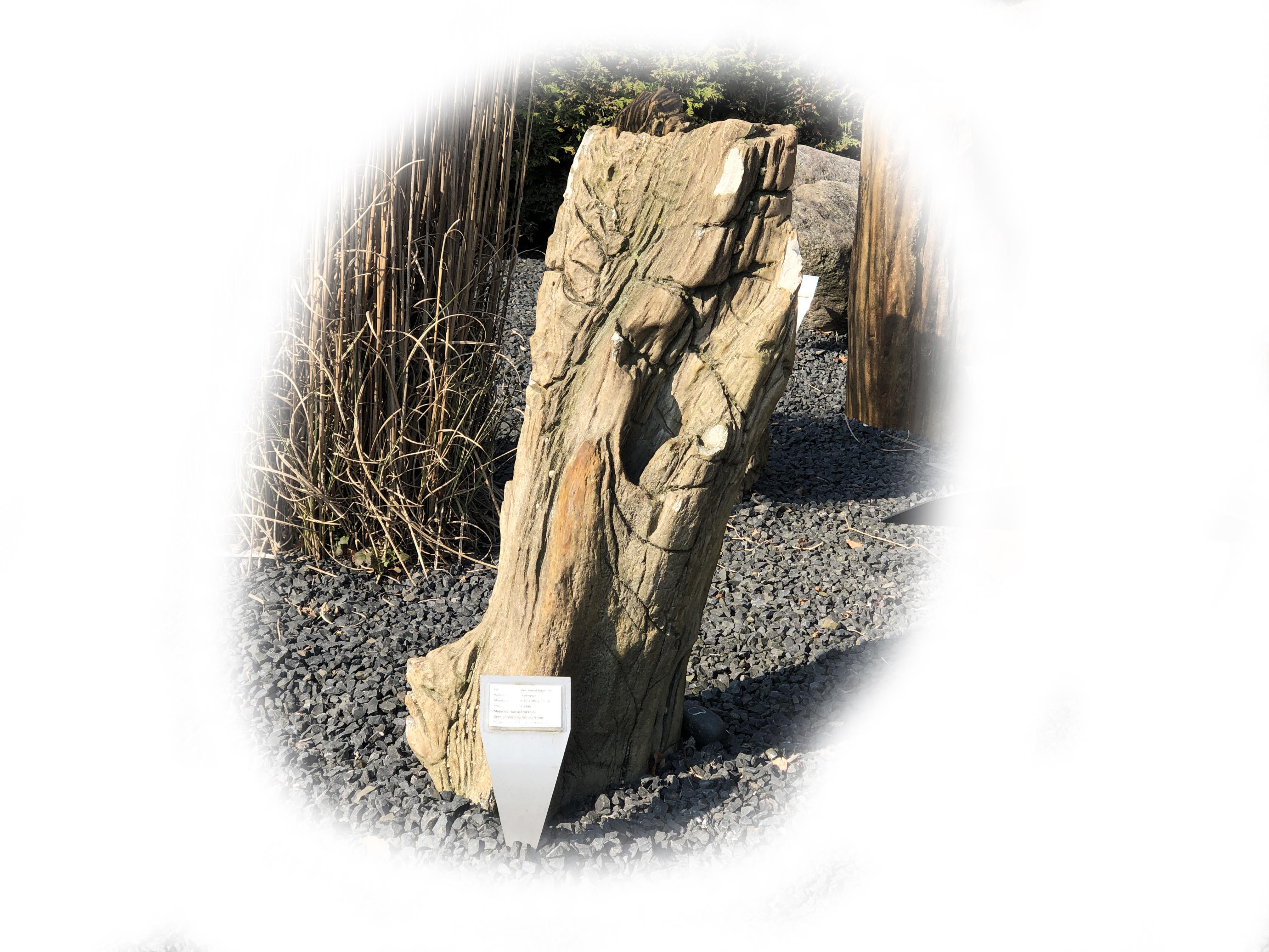 Versteend hout K-135